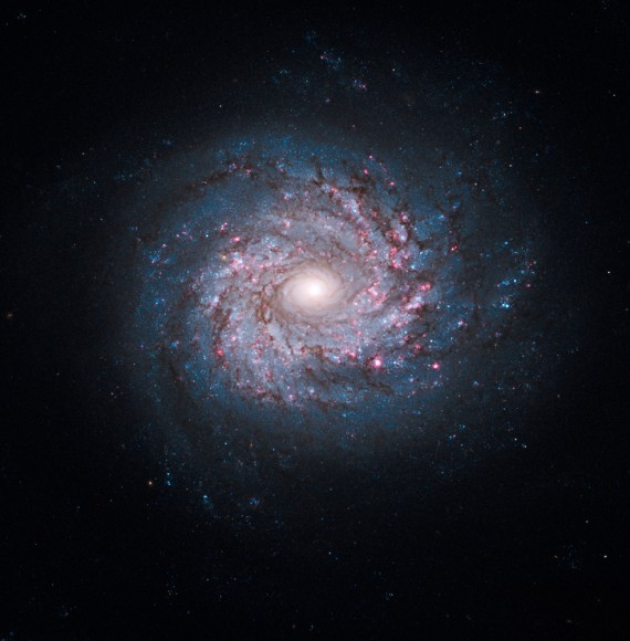 Hubble Spins the Wheel on Star Birth